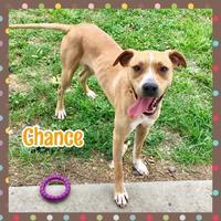 Adopt A Pet :: Chance - Jasper, IN