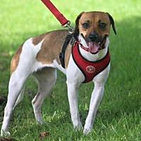 Adopt A Pet :: Marsha&Otto/MS - Columbia, TN