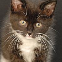 Adopt A Pet :: Jo-Lynn - Newland, NC