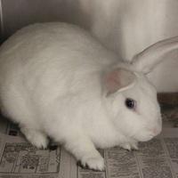 Adopt A Pet :: *CRI-KEE - Las Vegas, NV