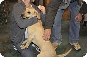 Labrador Retriever Mix Dog for adoption in Sedan, Kansas - Waneta