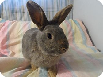 Dwarf Mix for adoption in Hillside, New Jersey - Lavender