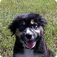 Adopt A Pet :: Miami - Available SOON - Savannah, GA