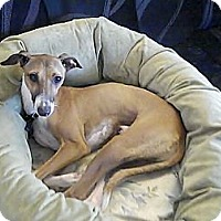 Adopt A Pet :: Milo - Costa Mesa, CA