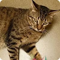 Adopt A Pet :: George FURman - McDonough, GA