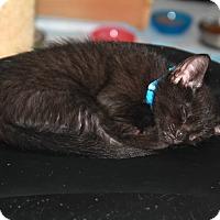 Adopt A Pet :: Newton - Santa Rosa, CA