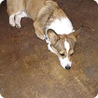 Adopt A Pet :: Mochi - Simi Valley, CA