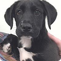 Adopt A Pet :: Amy#1M - Orlando, FL