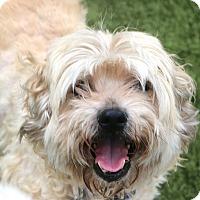 Adopt A Pet :: Gordon&Sushi turned in to die - Woonsocket, RI