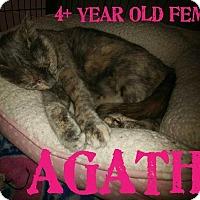 Adopt A Pet :: Agatha - Dickson, TN