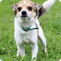 Adopt A Pet :: Pullman - Waldorf, MD