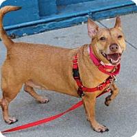 Adopt A Pet :: PEANUT - San Francisco, CA
