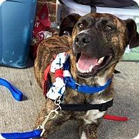 Adopt A Pet :: Buddy Love - Barrington, RI