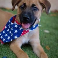 German Shepherd Dog Mix Dog for adoption in Von Ormy, Texas - Fynn