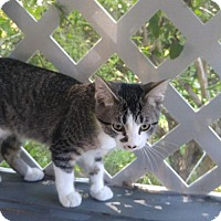 Adopt A Pet :: Sparkles - Montello, WI