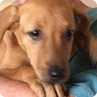 Adopt A Pet :: Mandy - Olympia, WA