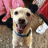 Adopt A Pet :: Sissy - San Ramon, CA