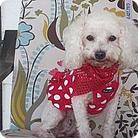 Adopt A Pet :: PARIS - Stockton, CA