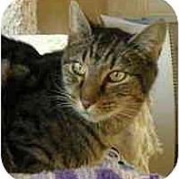 Adopt A Pet :: Raja - Portland, OR