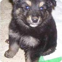 Adopt A Pet :: Bogi - Evansville, IN