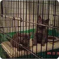Adopt A Pet :: Littles - Davis, CA