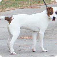 Adopt A Pet :: Thor - Chapel Hill, NC