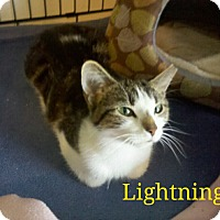 Adopt A Pet :: Lightening - Indianapolis, IN
