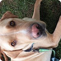 Adopt A Pet :: Taylor - Homewood, AL