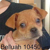 Adopt A Pet :: Beulah - Greencastle, NC