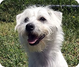 Terrier (Unknown Type, Small) Mix Dog for adoption in San Leon, Texas - Leroy