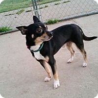 Adopt A Pet :: Diego - Norman, OK