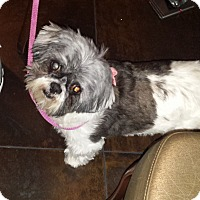 Adopt A Pet :: Quinn ~ Adoption Pending - Youngstown, OH