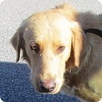 Adopt A Pet :: Willie - Murrells Inlet, SC