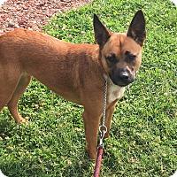 Adopt A Pet :: ZIGGY - LaGrange, KY