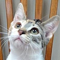 Adopt A Pet :: Cora - Westlake Village, CA