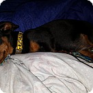 Adopt A Pet :: Edison - Niagra Falls, NY