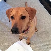 Adopt A Pet :: Nala - Harrison, NY