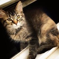 Adopt A Pet :: Astrid - St. Louis, MO
