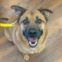 Adopt A Pet :: Mocha - Calgary, AB