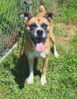 Boxer Mix Dog for adoption in Valley Falls, Kansas - Banks