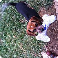 Adopt A Pet :: Bailey - New Washington, IN