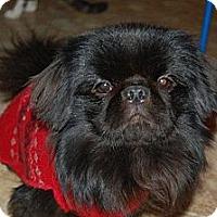 Adopt A Pet :: Coal - Hazard, KY