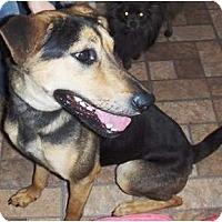 Adopt A Pet :: Coco - Chandler, AZ