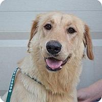 Adopt A Pet :: Summit - Danbury, CT