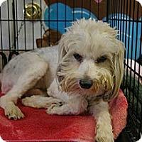 Adopt A Pet :: Buttercup - Brooksville, FL