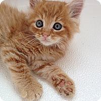 Adopt A Pet :: Dilly - Monroe, GA