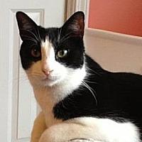 Adopt A Pet :: Dirk - Smyrna, GA