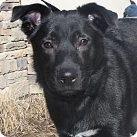 Adopt A Pet :: Baloo - Nashville, TN