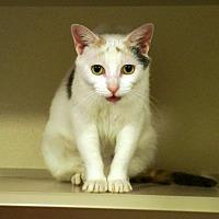 Adopt A Pet :: Bambi - New York, NY