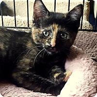 Adopt A Pet :: Corina - Berkeley Hts, NJ